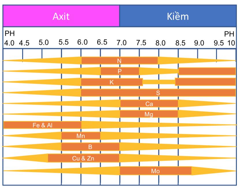 Tác động của chỉ số pH & EC đến các thành phần dinh dưỡng trong đất
